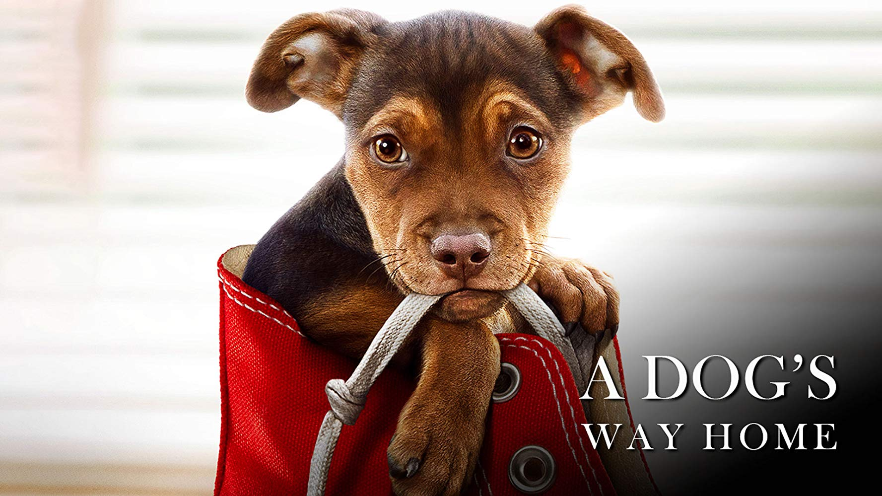 Reseña de la película Mis Huellas A Casa - A Dog is Way Home (2019)
